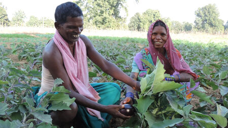 Sponsor seeds and fertilizers for an underprivileged tribal farmer